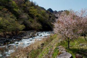 Japanische Blüte am Fluss, Daiya River, Nikko